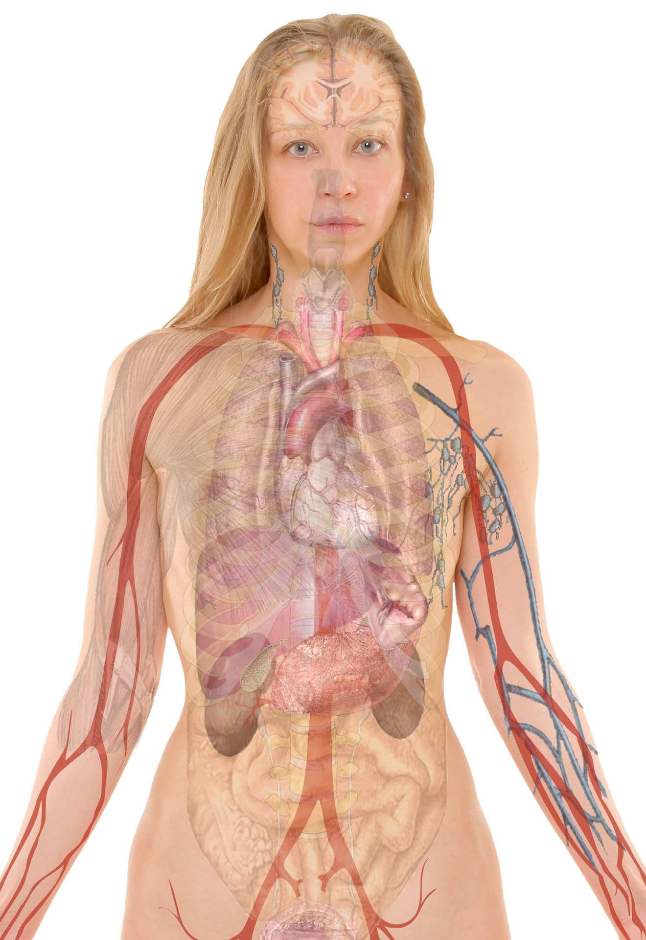 Fht Approved Level 3 Anatomy And Physiology Online Cpd Course